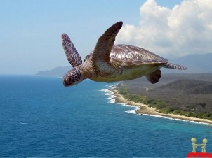 turtle-flying-in-the-air-funny-wallpaper
